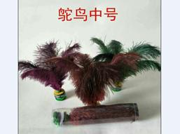 鸵鸟中号1